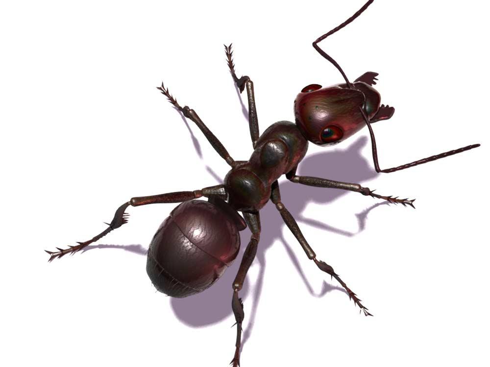 Como eliminar hormigas dentro de casa beautiful imagen titulada get rid of carpenter ants step - Como saber si tengo pulgas en casa ...